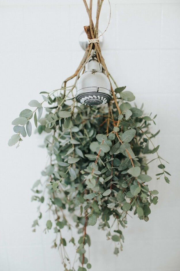 Wellness step #15: Enjoy the benefits of eucalyptus